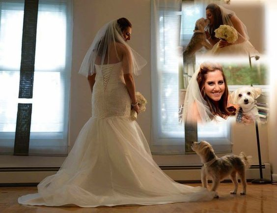 Wedding photos with my dog
