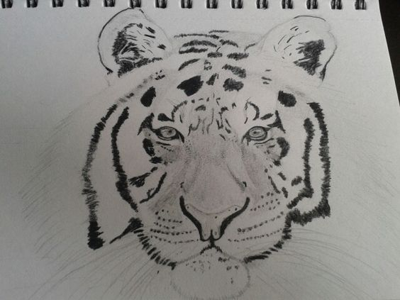 A tiger drawing I did yesterday