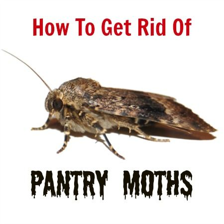 How To Get Rid Of Pantry Moths Housewife How To 39 S