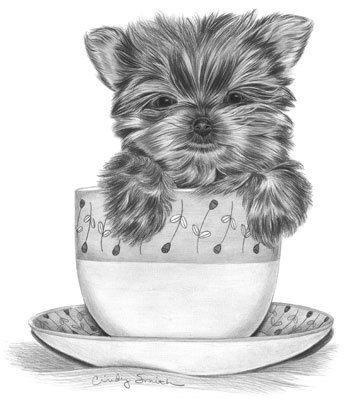 Artist workshop how to draw a yorkie puppy step by step for Yorkie coloring pages