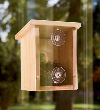 Observation Birdhouse - How cool is this?  Wonder if the birds would really nest in this with all the eyes watching.