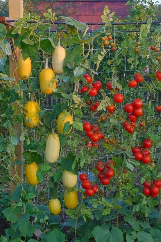 Alternative Gardning: Vertical Gardening For Space Utilization and Landscaping