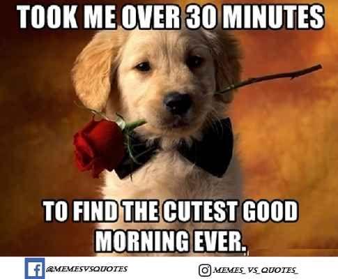 Good Morning Meme Good Morning Meme Good Day Quotes Good Morning Handsome