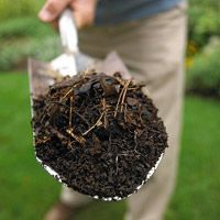 Do you have clay #soil? Here are some tips to make it thrive.