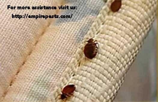 a3067571e32fe2090957114f1e40bde8 - How To Get Rid Of Bed Bugs While Backpacking