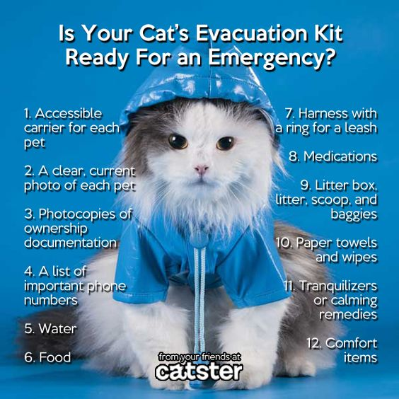 Pin By Tabitha Hill On Great Pet Information Cat Emergency Cat