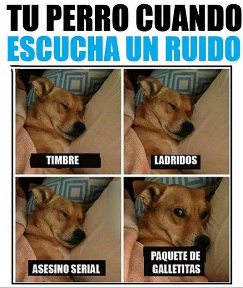 Tu Perro Cuando Escucha Un Ruido Chistes Divertidos Memes Memes De Perros Chistosos