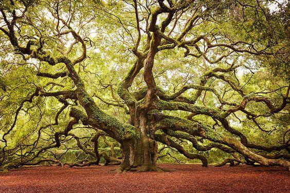 Voici 11 des plus beaux arbres de la planète Voici de magnifiques clichés des arbres les plus spectaculaires que notre planète a à offrir .