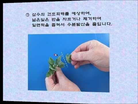 이경자의 삽목특강1_20160326 - YouTube