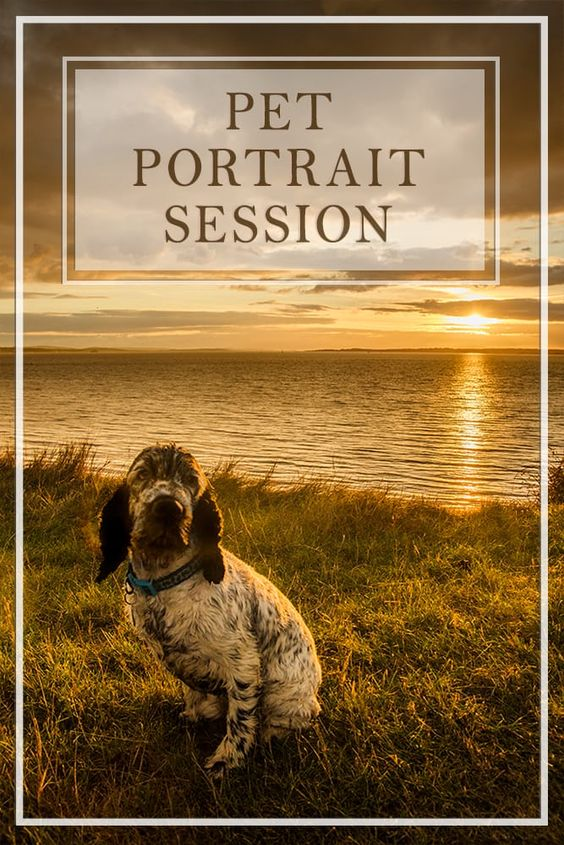 Custom Pet Portrait Session Portrait, Pet portraits and Pets - quote request form