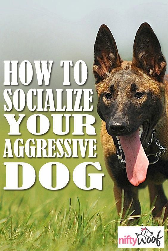 Basic Dog Training Instructions Dogtraining 7584922903