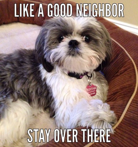 18 Best Shih Tzu Memes Of All Time Page 2 Of 6 The Paws Shih Tzu Dog Shih Tzu Puppy Shih Tzu Funny