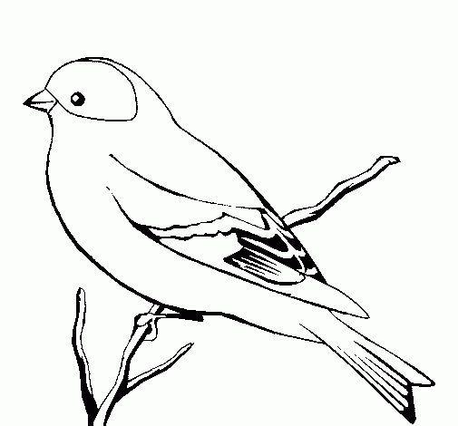 Pin Von Tanusree Auf Vogel Vogel Malvorlagen Ausmalbilder Vogel Vogel Skizze