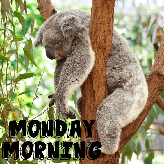 Are you allergic to Monday Morning? Hav3e a look at this and it will bring a smile ...