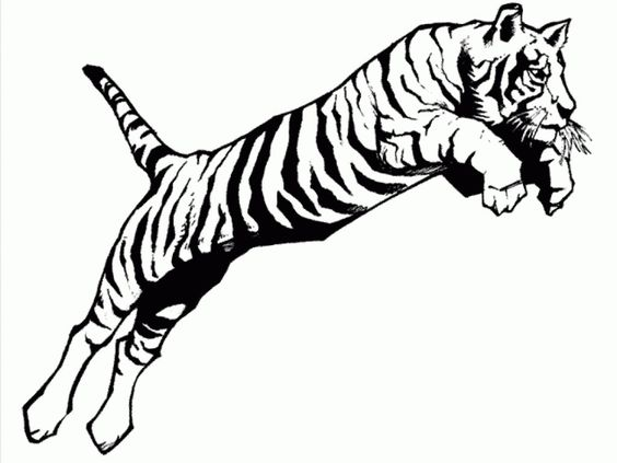 tiger color sheet a jumping tiger coloring page print for kids coloringverse