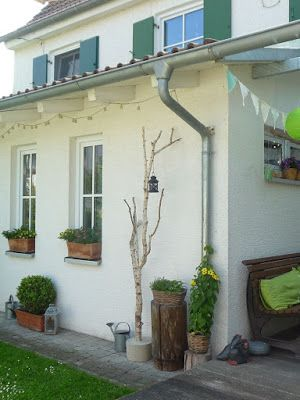 Meine grüne Wiese: Birke in Beton