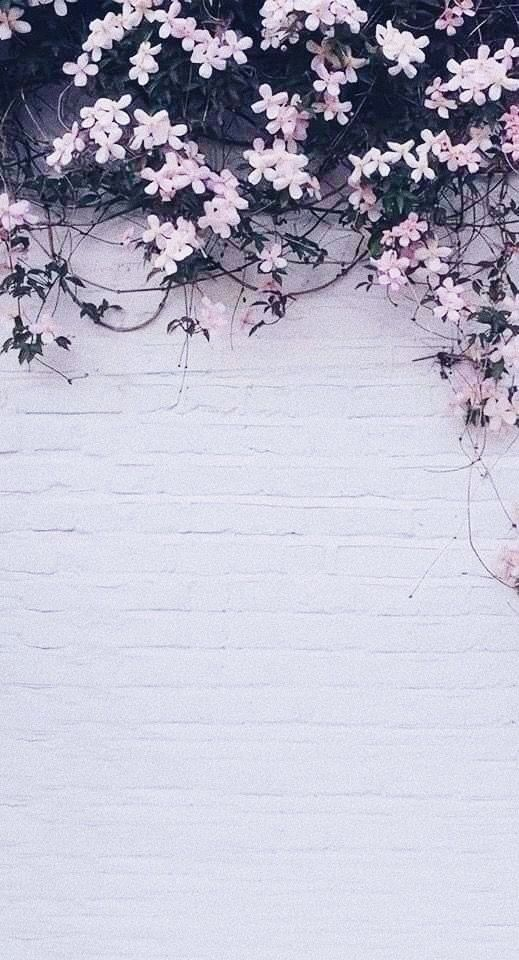 Untitled Phone Screen Wallpaper Aesthetic Iphone Wallpaper Cute Beautiful Wallpapers Backgrounds Flower Background Wallpaper Backgrounds Phone Wallpapers Beautiful wallpaper on phone