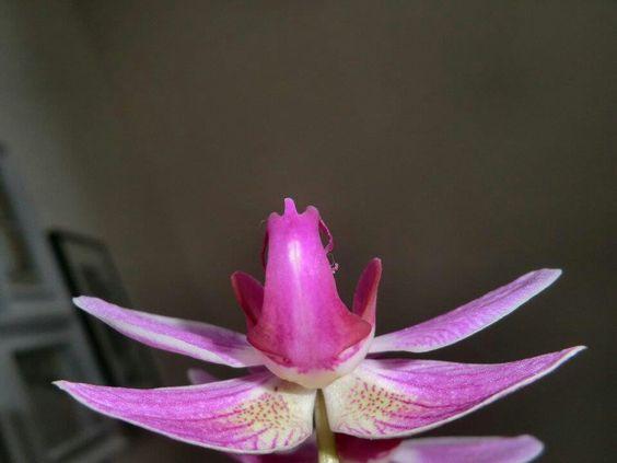 Orchideenflügel