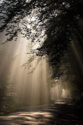 Hoge Veluwe | Flickr - Photo Sharing!
