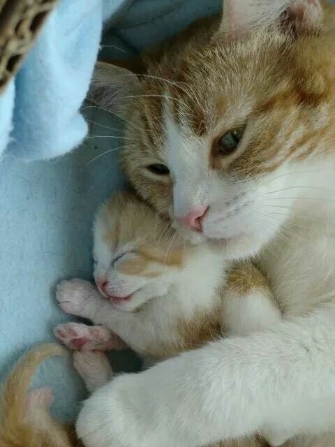 These Lovely Cats Will Make You Amazed Cats Are Wonderful Friends Prettycats Cute Cats And Kittens Pretty Cats Kittens