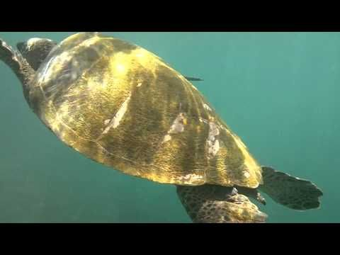 Snorkeling with Turtle Near Napili Bay, Maui, Hawaii. ~I've snorkeled by sea turtles in Hawaii but never got a picture!