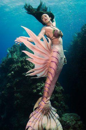 Mermaid Lily - China Mermaid