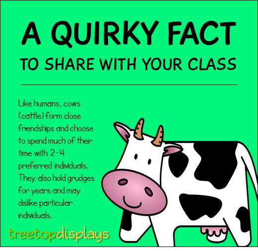A quirky fact about cows to share with your class - from Treetop Displays. Visit our TpT store for printable resources by clicking on the provided links. Designed by teachers for Pre-Kindergarten to 7th Grade.