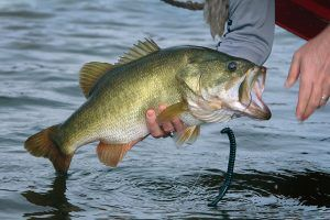 how to catch large mouth bass, how to catch bass