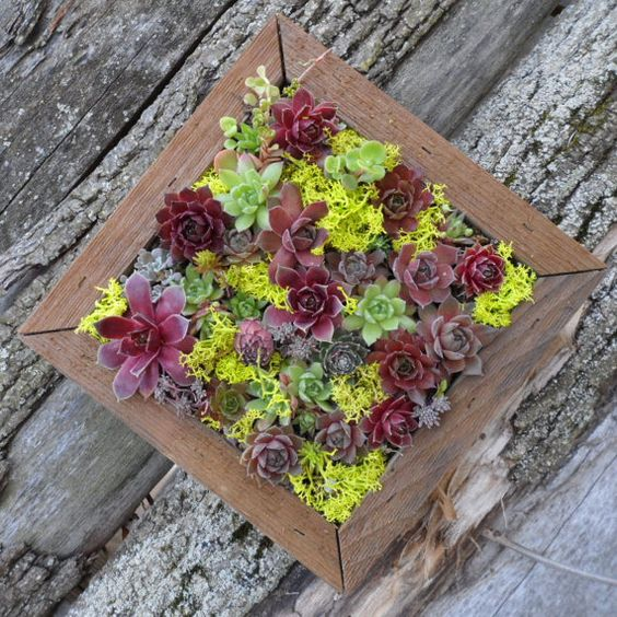 Succulent Living Picture Vertical Wall Kit >> sturdy yet rustic