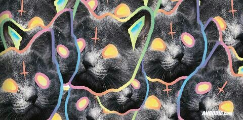 TRON THE CAT