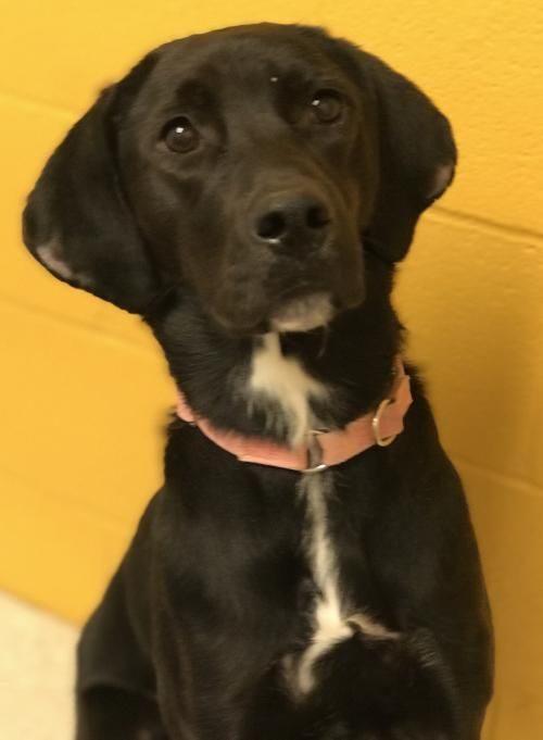 This Lonely Dog Needs A Home Thanks For Sharing Labrador