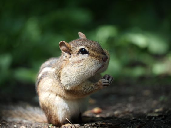 Had fun feeding and taking photos of Chipmunks <3