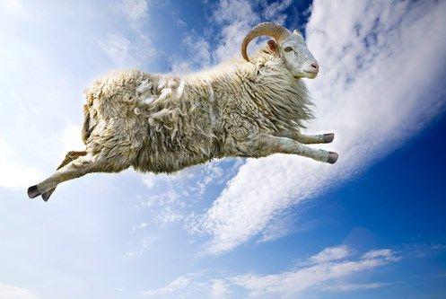 ما هو تفسير حلم الخروف في المنام للعزباء موقع مصري Animals Sheep Cute Animals