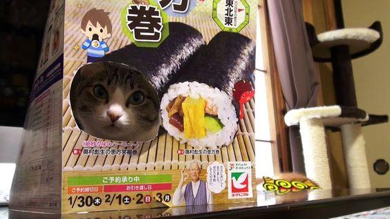 猫の恵方巻き - Cats Sushi Roll -  --Seriously, a real cat is in that box. Meow.