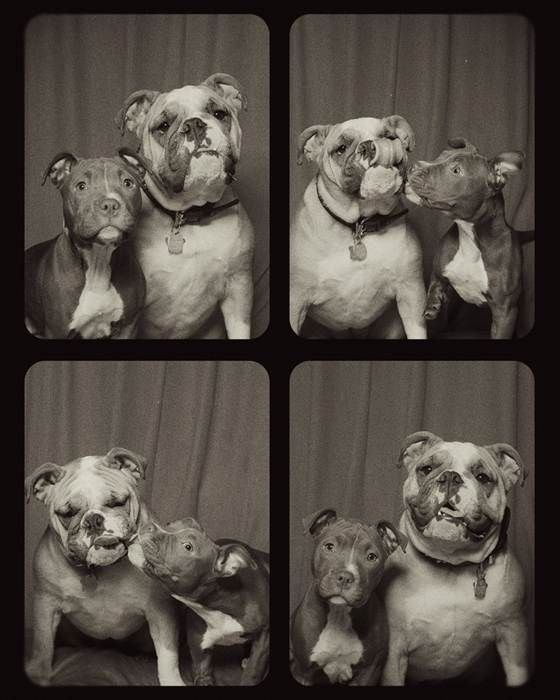 See what happens when you put dogs in a photo booth. They are super cute and super sweet!