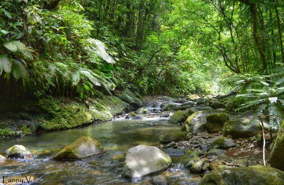 La rivière lézarde.  Guadeloupe