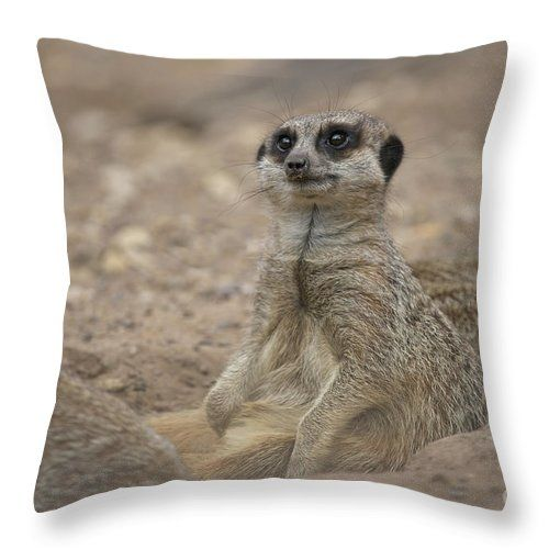 Meerkat Throw Pillow For Sale By Msvrvisual Rawshutterbug Pillow Sale Throw Pillows Meerkat