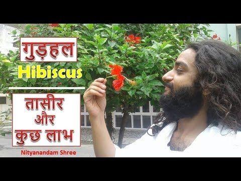 ग ड हल क त स र और फ यद Ayurvedic Benefits Of Hibiscus Flower Gudhal Ke Phool By Nityanandam Shree Youtube Art Wallpaper Hibiscus Playbill
