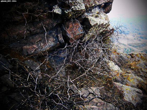 Rocas & Ramas #Wallpaper