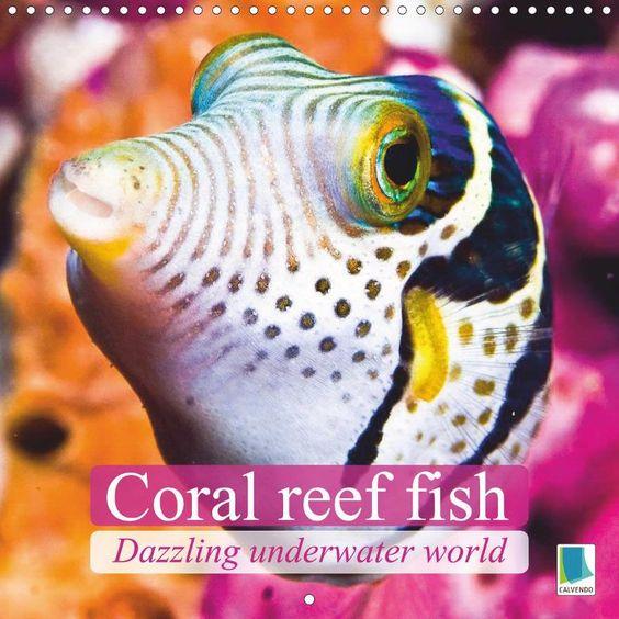 Dazzling underwater world: Coral reef fish - CALVENDO calendar - http://www.calvendo.de/galerie/dazzling-underwater-world-coral-reef-fish/?s=coral%20reef&pcat=0&cat=0&