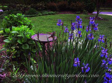 Siberian Iris in a Hudson Valley Garden - traditional - landscape - new york - by Summerset Gardens/Joe Weuste