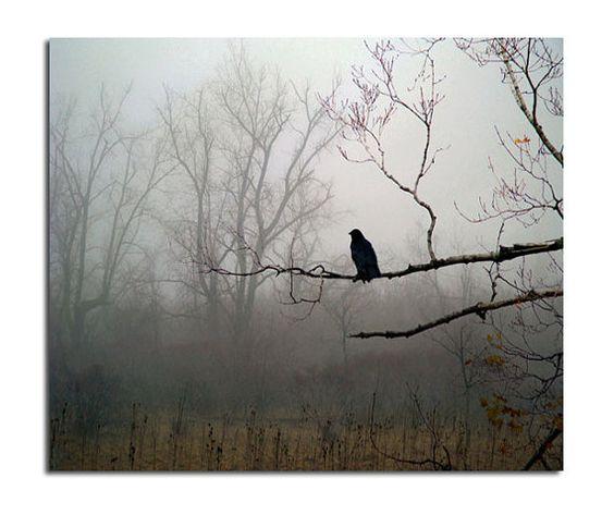 Brumoso Woods, Woodland escena Niebla, Corvus Corax, Oscuro Tiempo, gótico - Cuervo En Niebla