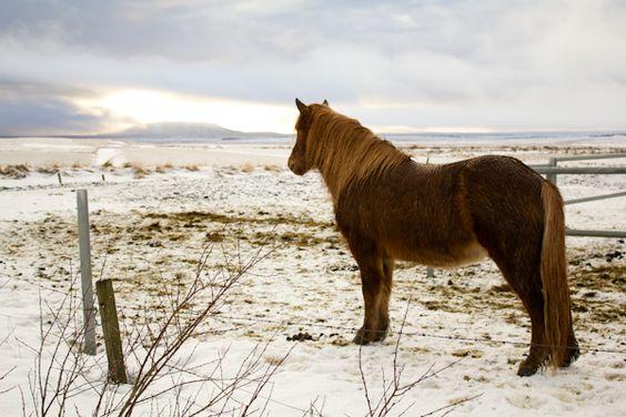 Islande : 50 choses à faire en un week-end by Vert Cerise