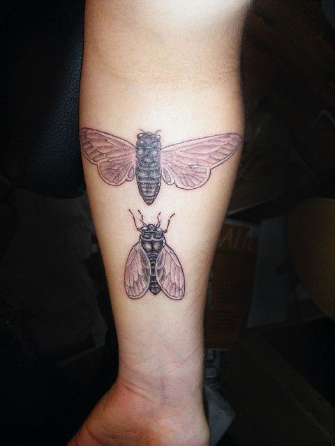 A diptych of cicadas. Done by George Long of Seattle, WA.