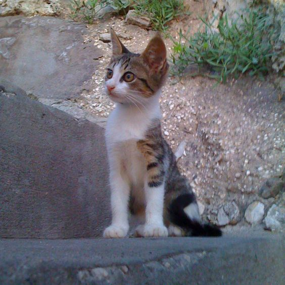 Capri's Cat