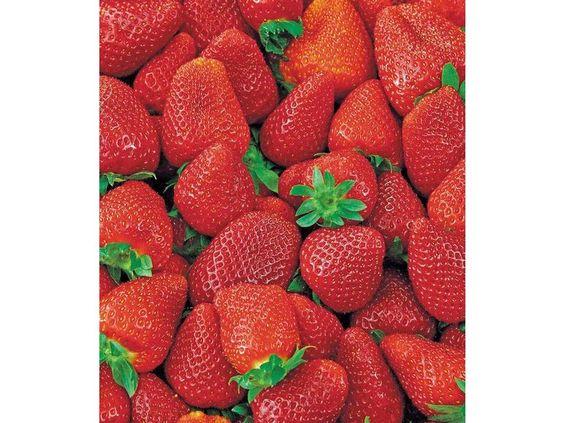 Erdbeere Korona® Erdbeerpflanzen Fragaria, 6 Pflanzen