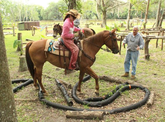 GREAT IDEA! Use plastic tubes to mimic snakes. --'Mr Ed' helps horses get over their skittishness at the Longbranch in East Manatee | Lakewood Ranch Herald | Bradenton Herald