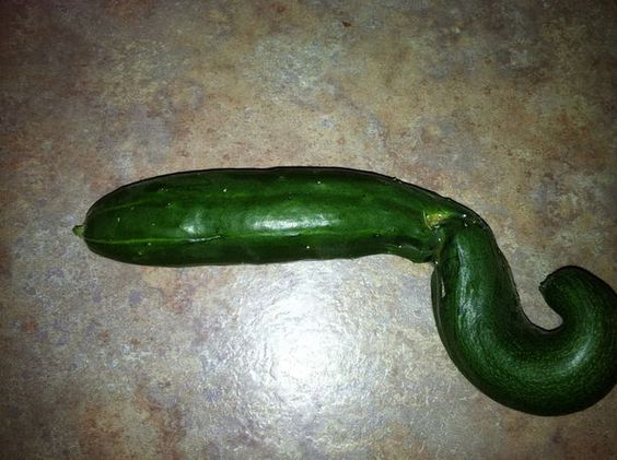 Funny-Shaped Food:   This photo was sent in by Rachel L. from Clinton Township, MI!