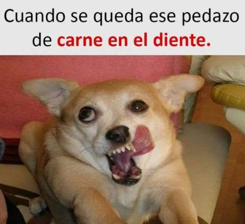 Imagenes De Risa 2019 Todo Imagenes Animal Memes Best Memes New Memes