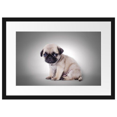 Pug Puppy In Front Of Background Framed Photograph East Urban Home